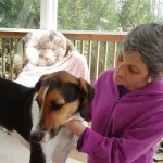 Companion animal receives energy balancing from Polly Lazaron, Energy Artist.
